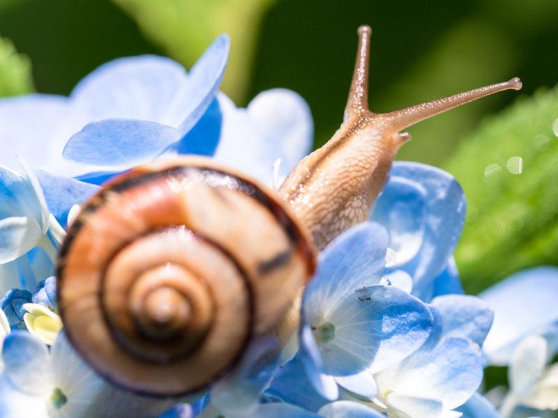 カタツムリの画像 p1_21