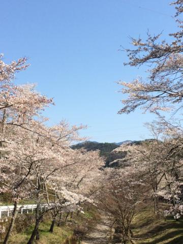 寺尾ケ原千本桜公園