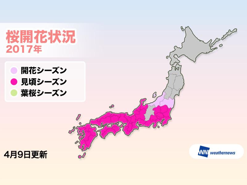 西日本全域で見頃シーズンに - ...