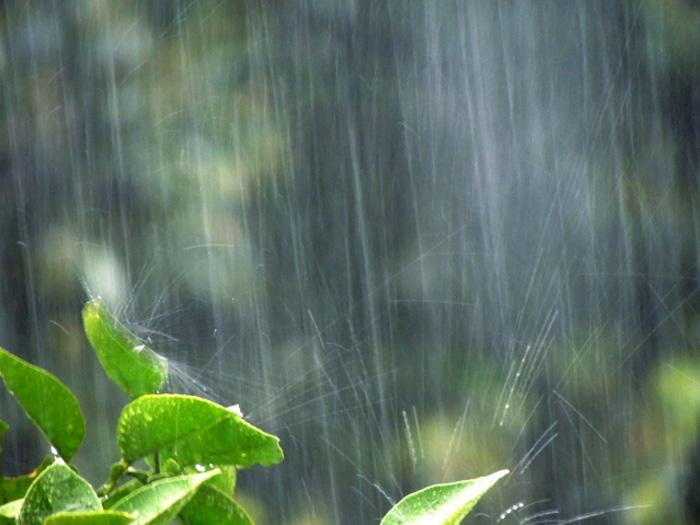 西日本:局地的な激しい雨の恐れ東日本:暑さとにわか雨が心配北日本:1日の寒暖差に注意参考資料など