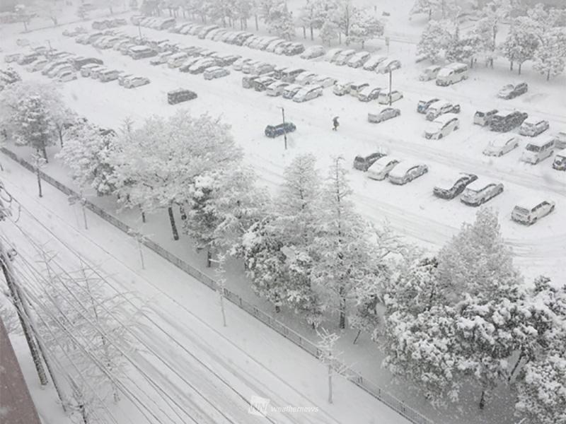 情報 雪 新潟 県 現在の雪の状況