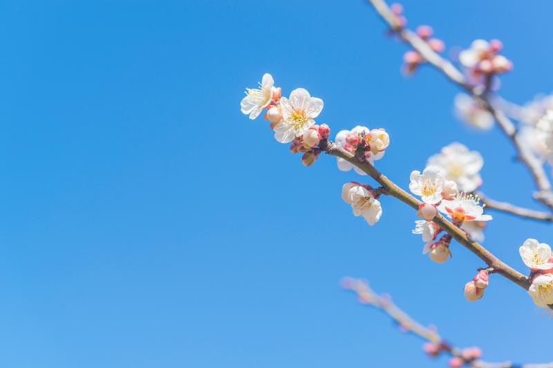 立春】こんなに寒いのになぜ「春」? - ウェザーニュース