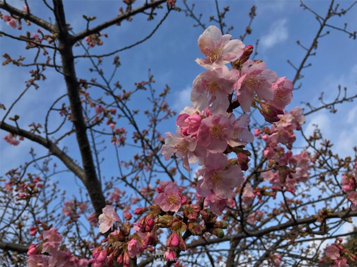 今日は二十四節気『春分』・七十二候『雀始巣』 - ウェザー ...