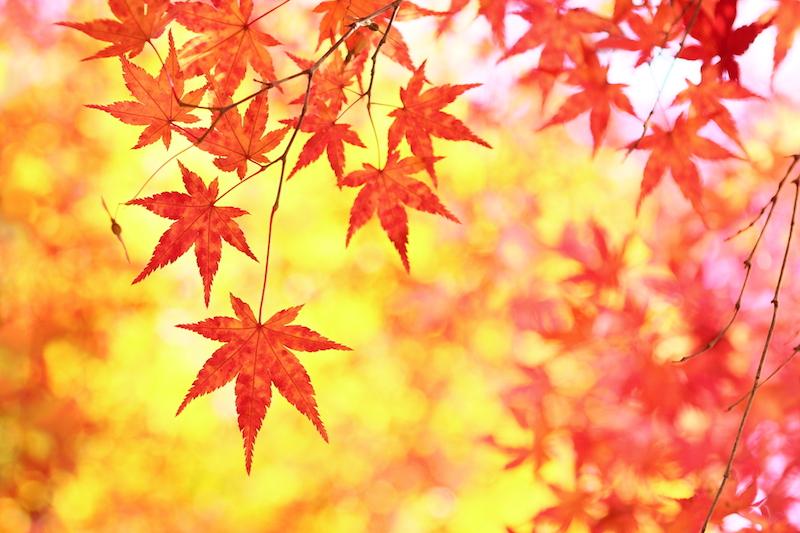 「紅葉」の画像検索結果