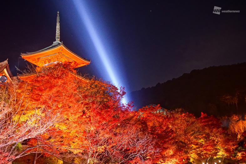 至極の紅葉ライトアップ 京都・清水寺改装中の本堂も美しい…スポット情報気になる天気は?参考資料など