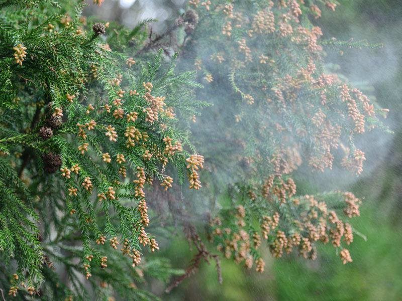 この時季の肌トラブルは「花粉皮膚炎」かも!? , ウェザーニュース