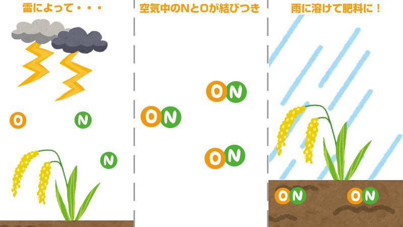 役割 窒素