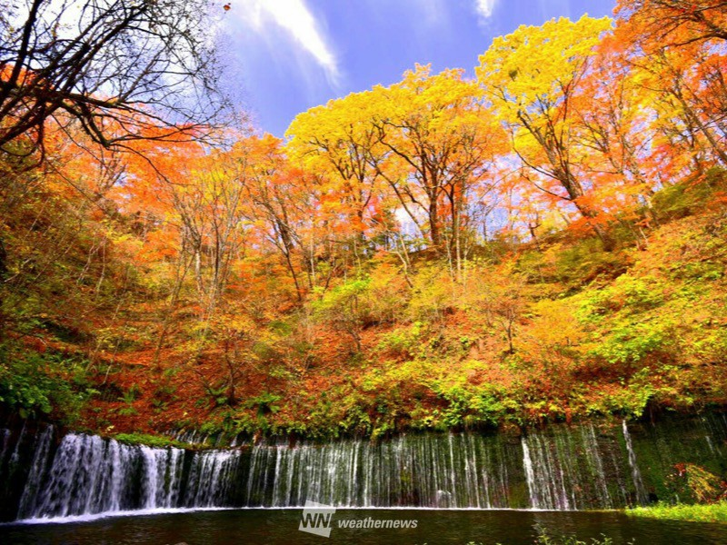 秋晴れがもたらした至福の錦秋時間を忘れる紅葉絶景各地の紅葉の様子明日は折りたたみ傘を持って外出を参考資料など