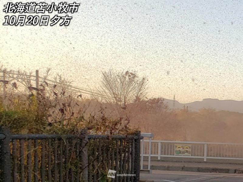 北海道で平年の10万倍の雪虫 大量発生の要因は夏の高温か - ウェザー ...