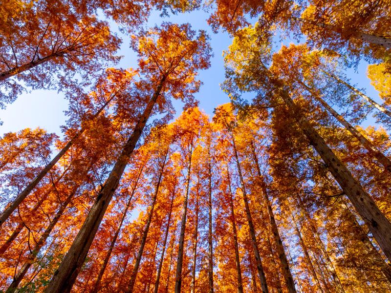 木」と「樹」の使い方を間違っていませんか!? - ウェザーニュース