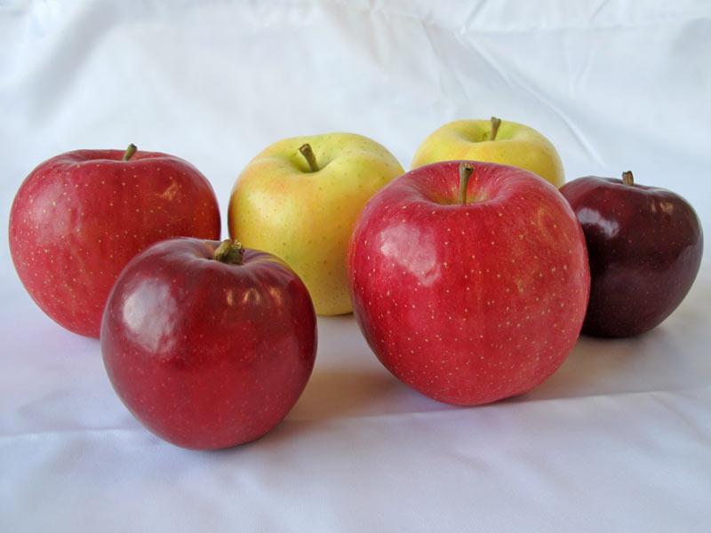 """品種により個性はさまざま 甘さや酸味が一目でわかる""""りんごチャート ..."""
