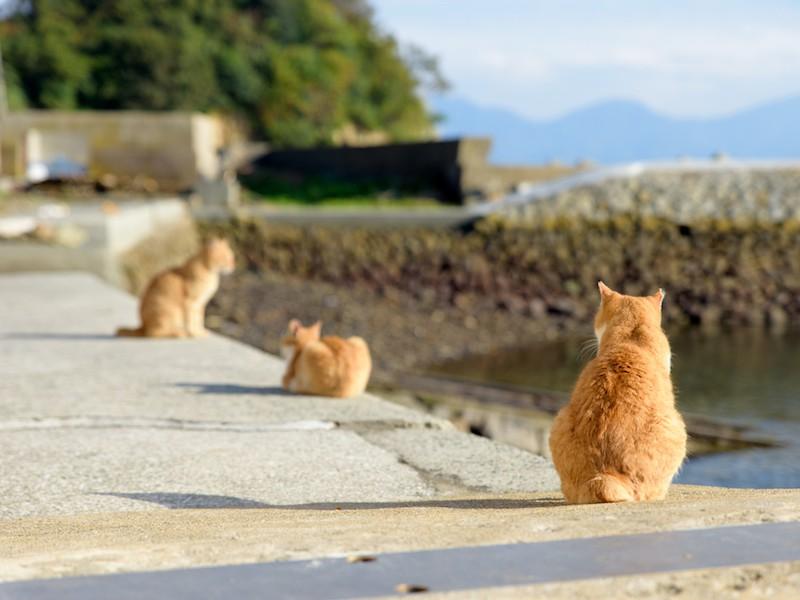 2月22日は猫の日 動物が知らせる天気の前兆 - ウェザーニュース