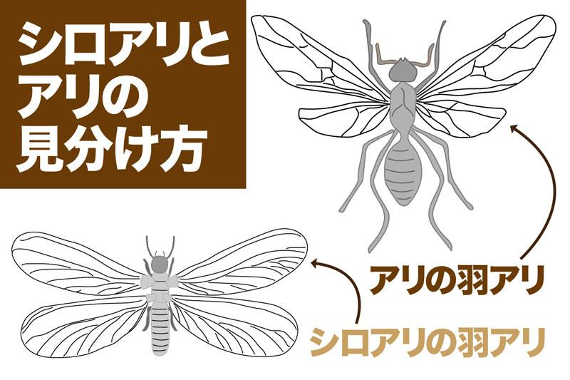 違い と 羽 アリ シロアリ の