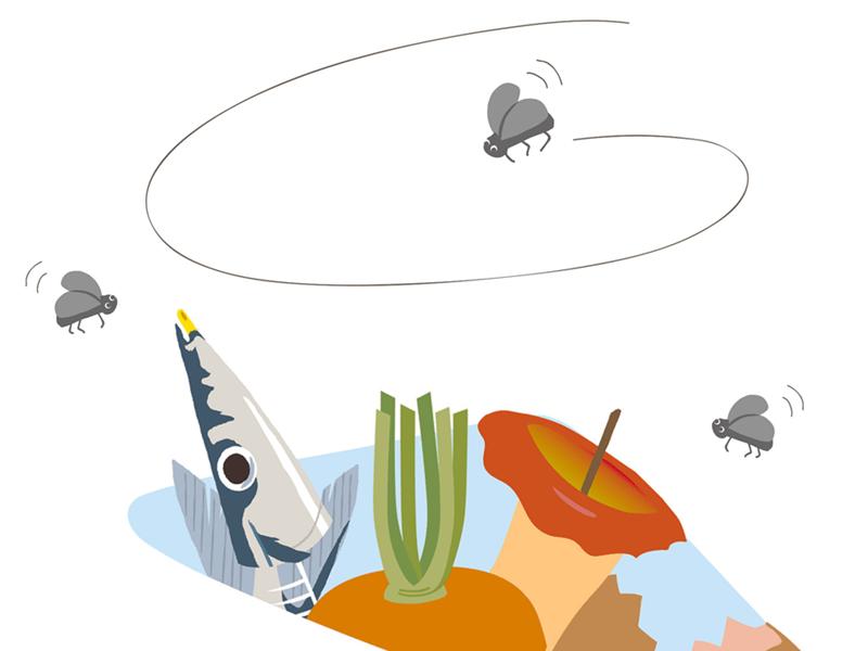 発生 のか する は コバエ なぜ キノコバエが発生する原因とは?キノコバエの対策と駆除方法について