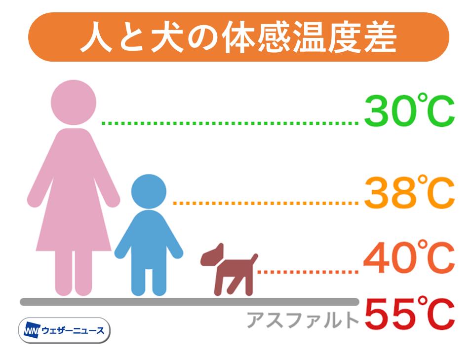 犬の熱中症や火傷に注意 人より犬はもっと暑い!?