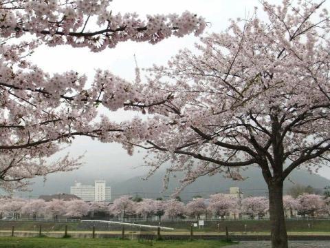 山形の桜 花見情報2019 最新の桜開花予想、花見・名所情報 ...
